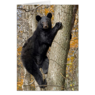 American Black Bear Climbing a Tree Card