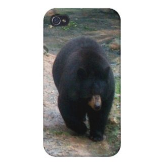 American Black Bear iPhone 4 Hard Shell Case Case For The iPhone 4