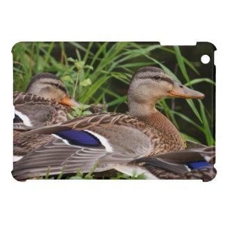 American Black Duck iPad Mini Case