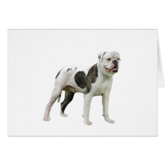 American Bulldog - Brown-White Card
