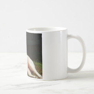 american bulldog coffee mug