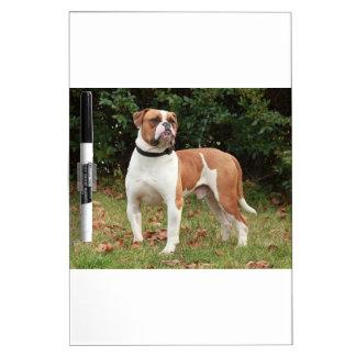 American Bulldog Dog Dry Erase Board
