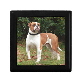 American Bulldog Dog Gift Box