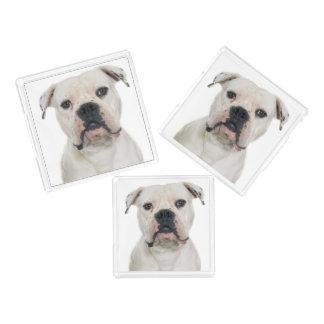 American bulldog portrait acrylic tray