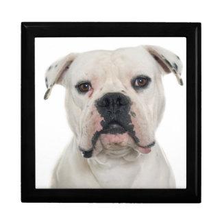American bulldog portrait gift box