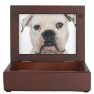 American bulldog portrait keepsake box