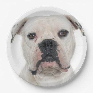 American bulldog portrait paper plate