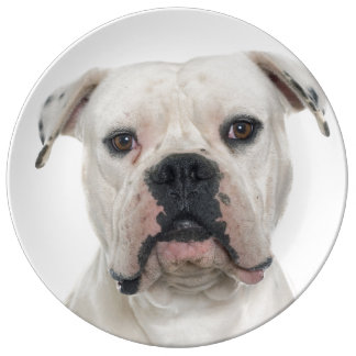 American bulldog portrait plate