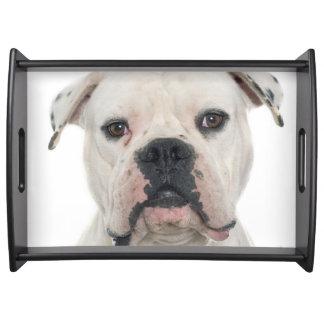 American bulldog portrait serving tray