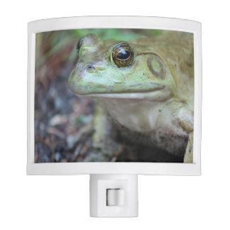 American Bullfrog Night light
