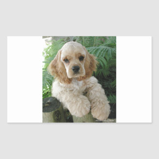 American Cocker Spaniel Dog And The Green Fern
