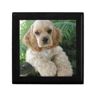 American Cocker Spaniel Dog And The Green Fern Gift Box