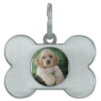 American Cocker Spaniel Dog And The Green Fern Pet Tag