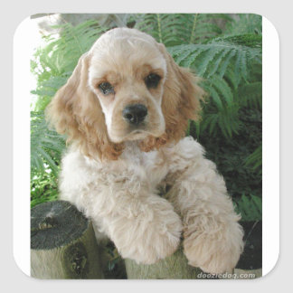 American Cocker Spaniel Dog And The Green Fern Square Sticker