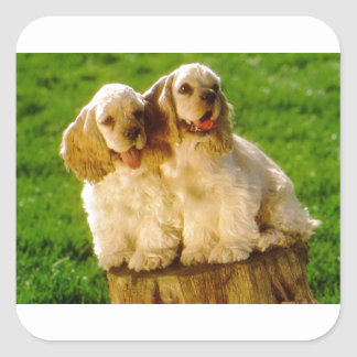 American Cocker Spaniel Puppies On A Stump Square Sticker