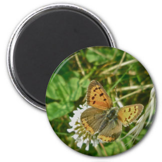 American Copper Butterfly 2 Inch Round Magnet