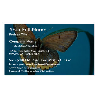 American copper butterfly business card template