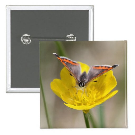 American Copper Butterfly Button