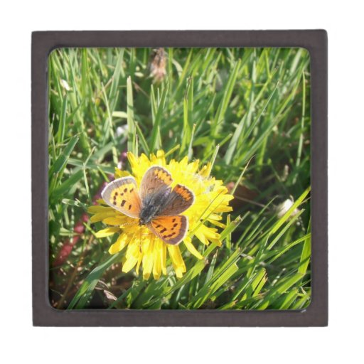 American Copper Butterfly Gift Box Premium Gift Boxes