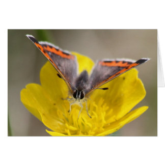 American Copper Butterfly Greeting Card