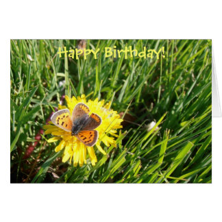 "American Copper Butterfly ""Happy Birthday"" card"