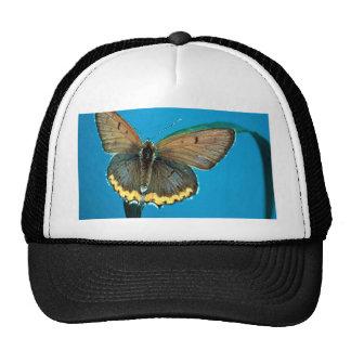 American copper butterfly hat