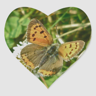 American Copper Butterfly Heart Sticker