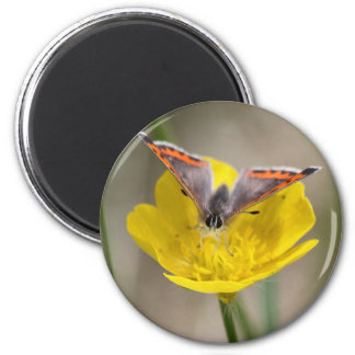 American Copper Butterfly Refrigerator Magnets