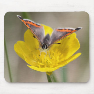 American Copper Butterfly Mouse Pad