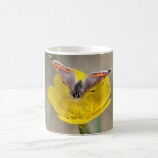 American Copper Butterfly Mugs