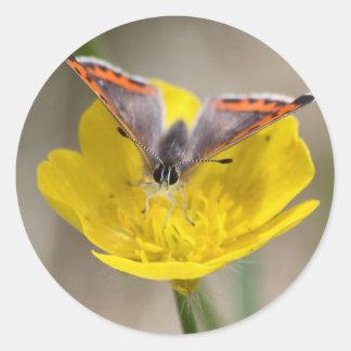 American Copper Butterfly Round Sticker