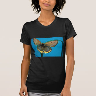 American copper butterfly shirts