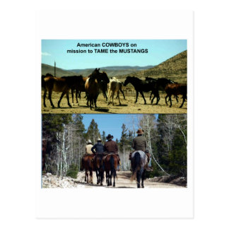 American Cowboys on trip to TAME Mustang Horses Postcard