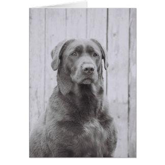 American Dog Card