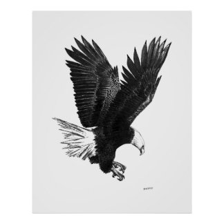 American Eagle a Pen and Ink Drawing Posters