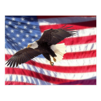 American Eagle and Flag Postcard