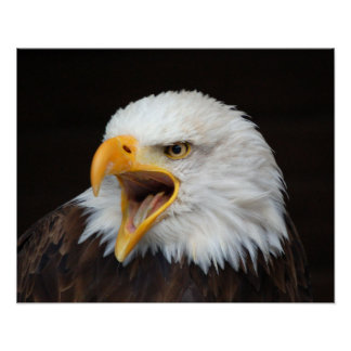 AMERICAN EAGLE - by Jean Louis Glineur Poster