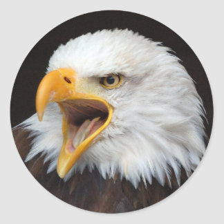 AMERICAN EAGLE - Photography Jean Louis Glineur Classic Round Sticker