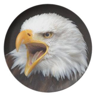 AMERICAN EAGLE - Photography Jean Louis Glineur Plate