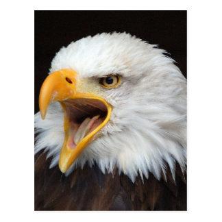 AMERICAN EAGLE - Photography Jean Louis Glineur Postcard