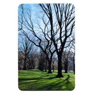 American Elm Trees Magnet