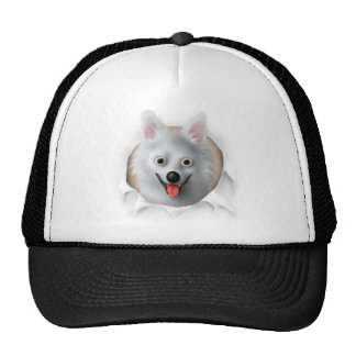 American Eskimo Busting Out Hats