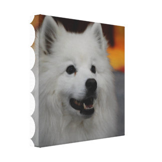 American Eskimo Dog Canvas Print