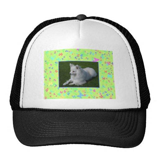 American Eskimo Dog Mesh Hat
