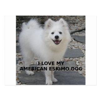 American_Eskimo_Dog_love w pic Postcard