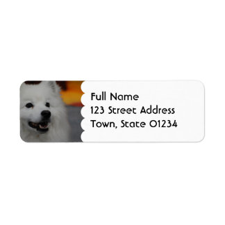 American Eskimo Dog  Mailing Labels