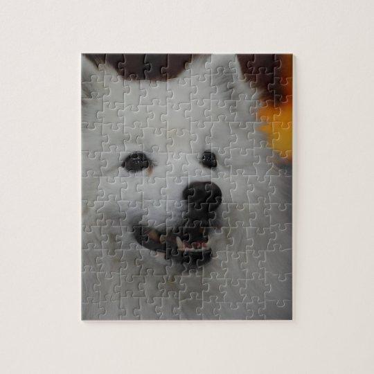 American Eskimo Dog Puzzle