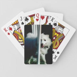 American Eskimo (Eskie) weaving in Shadow Poker Deck