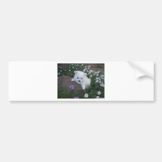 American Eskimo Puppy Dog Bumper Sticker