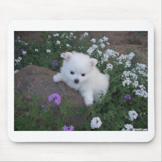 American Eskimo Puppy Dog Mouse Pad